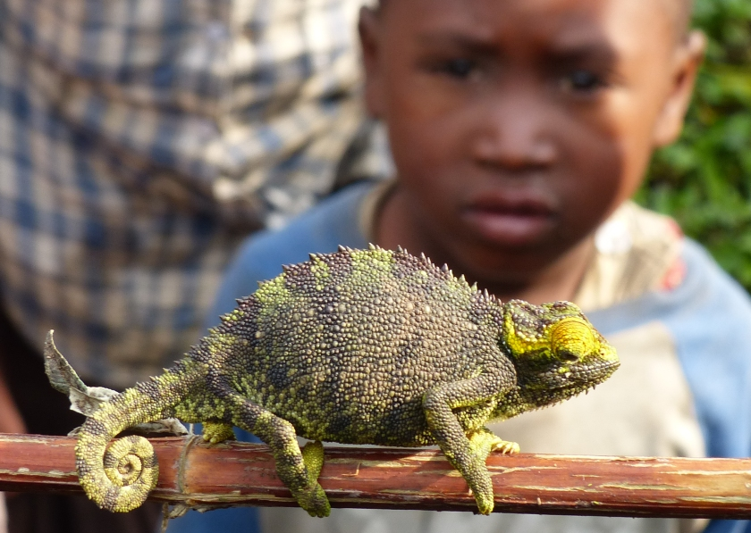 The Malagasy think chameleons are evil spirits
