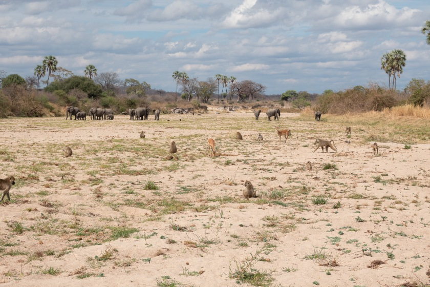 elephants, baboons, gazelles