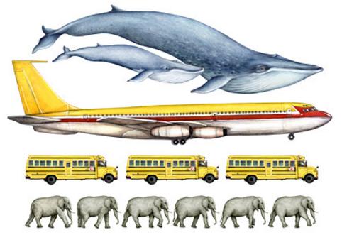 blue_whale_size