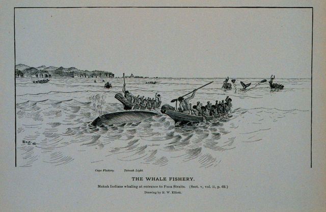 38763-makah-indians-whaling-at-entrance-to-fuca-straits-drawing-by-h