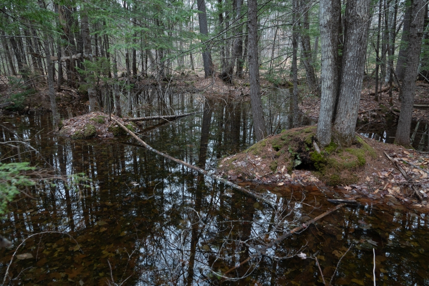 Vernal pool used by wood frogs